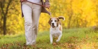 Pet therapy sau beneficiile animalelor de companie la varsta a treia