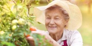 Terapii alternative pentru Alzheimer: Cat de util poate fi gradinaritul?